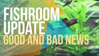 Good new and Bad news - Fish room update  - Treating fish tank with antibiotics.