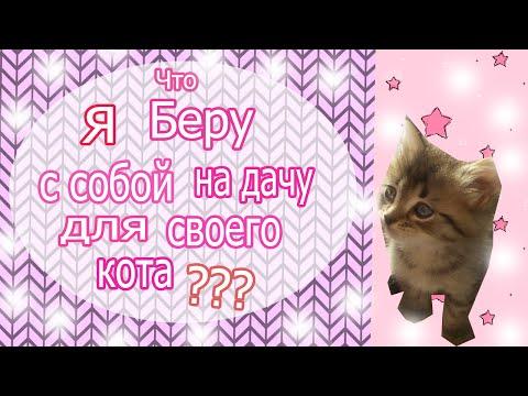 Как собрать кота на дачу???