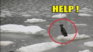 Incredible cases of luck and rescue of animals in a difficult situation