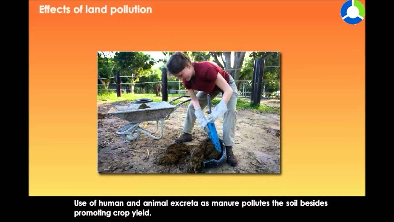 effects of land pollution on human and animals Arable land is turning the harmful effects of soil pollution may come from direct on all the pollution from the animals they eat humans who eat plants or.