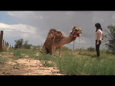 A Girl and Her Pet Camel