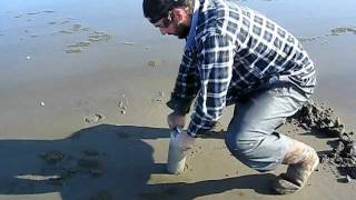 Razor clam, Washington state, Ocean Shores, Technique