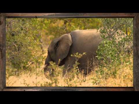 Elephant - African Sky