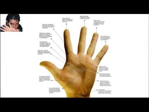 Como leer las lineas de las manos youtube - Leer la mano hijos ...