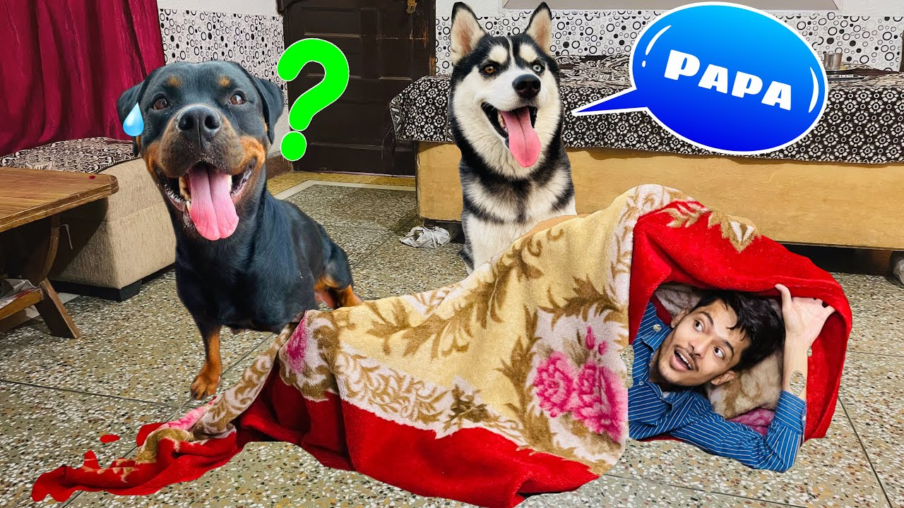 Trying Viral TikTok Challenge On My Dogs || Dog can talk part 113,Rottweiler,Husky  Review reloaded