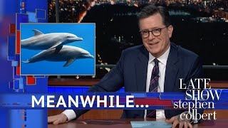 Meanwhile... A New Study On Dolphin Sex