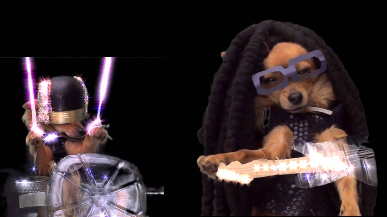 Daft Dog Videos