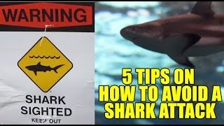 Shark Attack - How To Avoid Getting Attacked By A Shark!