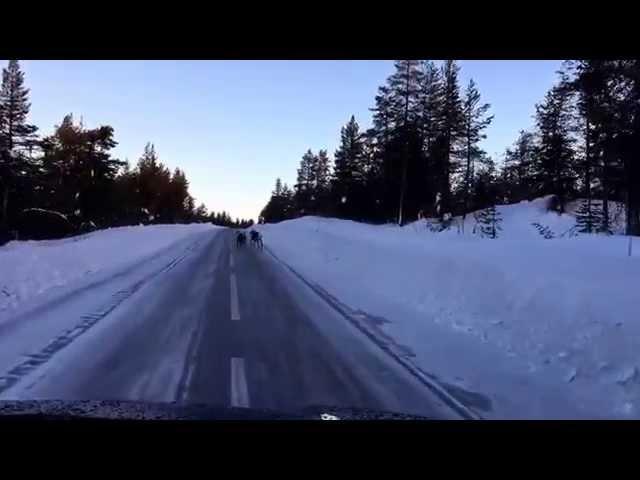 Nordkapp Vintertur 2015 - Video 16 - Rener på vejen.