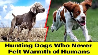 Hunting Dogs Who Never Felt Warmth of Humans ‍