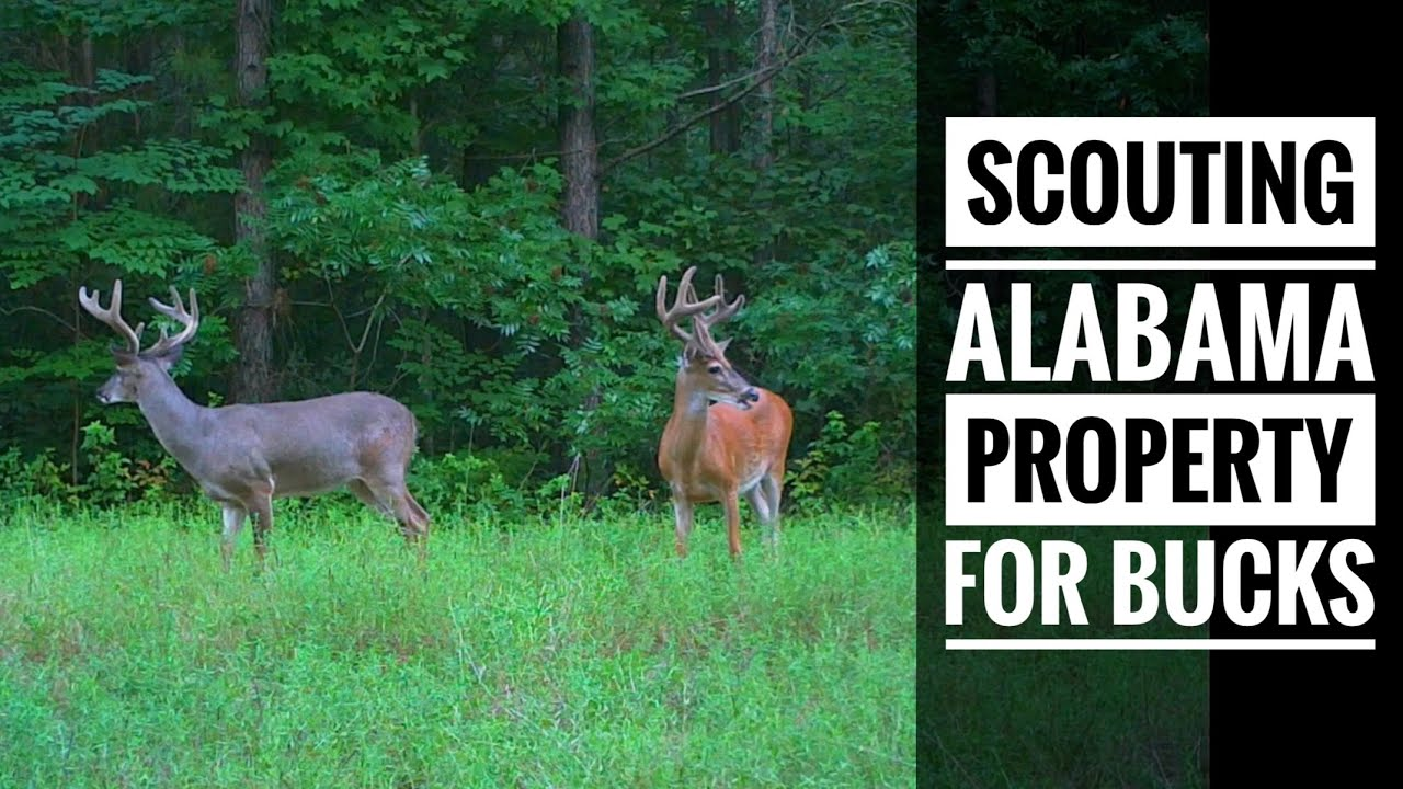 Scouting Alabama Property for Big Bucks - S10