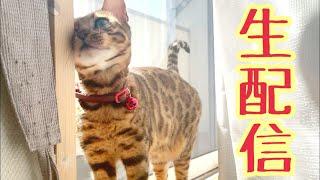 【ランチ生配信4/15】オデカケ前に猫6匹と生配信(パパさんいます)