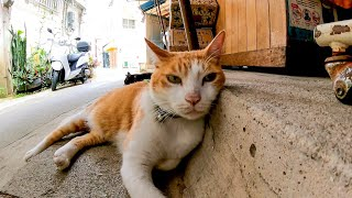 商店街の猫店員さん、店の裏で休憩中