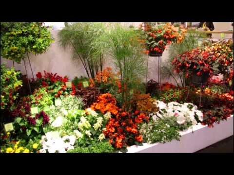 Kientzler Pflanzen-Konzepte Auf Der IPM 2015