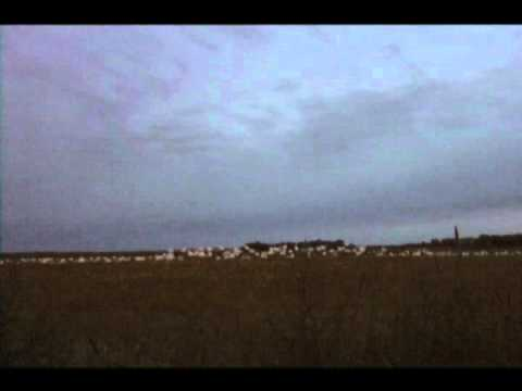 SNOW GOOSE HUNTING IN SASKATCHEWAN WITH PACIFIC WINGS PRAIRIE OUTFITTERS