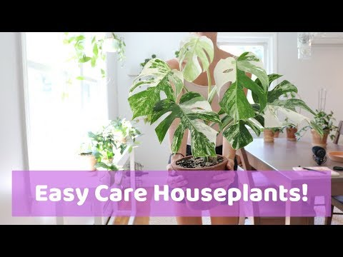 8 Easy Houseplants Great for Beginners!   & Care Tips!