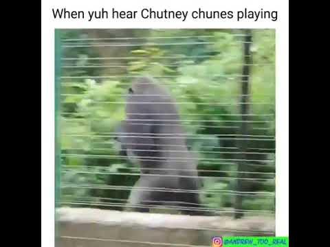 When yuh hear chutney chunes playing
