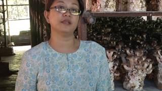 Projek Cendawan Gunung Jerai Kedah