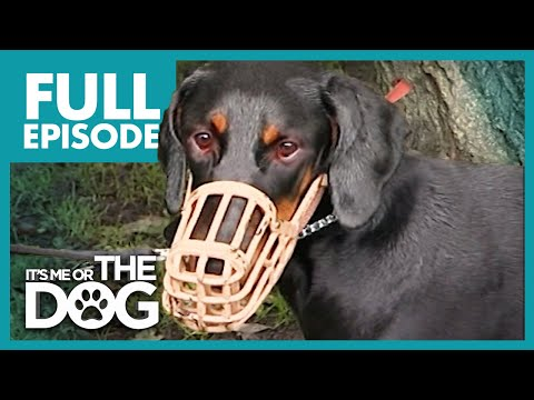 The Demonic Doberman: Harvey | Full Episode | It's Me or the Dog