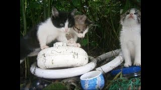 ビックリ、裏山から野良の子猫ちゃんがやって来た~(3) A stray kitten came from the mountain(3) 【いなか猫1771】japanese funny cat