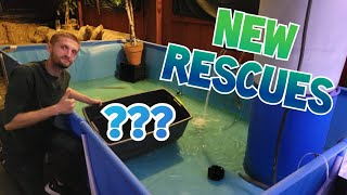 Our Latest Rescue Adventures With OFR and Willstar