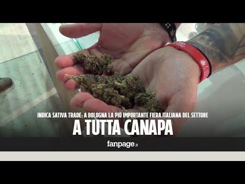 Dentro la più grande fiera sulla cannabis: tutto a base di canapa, anche le crocchette per cani