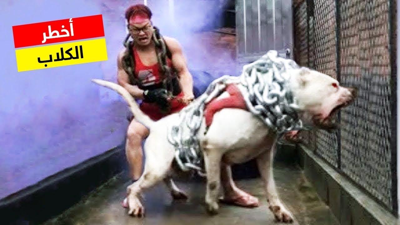 إذا رأيت هذا الكلب أهرب فوراً وانج بحياتك.. اخطر وأشرس الكلاب في العالم !!