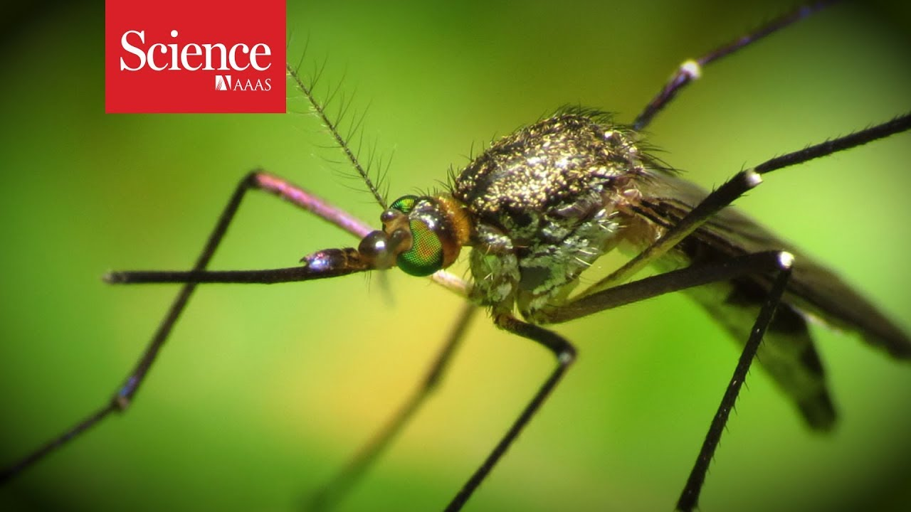 Help track mosquitoes with your cellphone