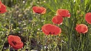 Enzo Jannacci - Sfiorisci bel fiore.wmv