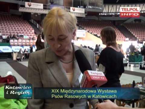 XIX Międzynarodowa Wystawa Psów Rasowych W Katowicach.