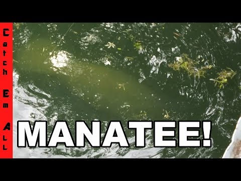 MANATEE ON FISHING LINE! Cops Called! Worst Fishing day EVER!