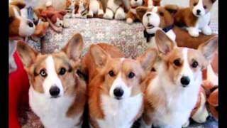 COVER ME WITH CORGIS (one for the kidz)
