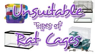 Unsuitable Types of Rat Cages | All About Rat Cages: Episode 1 thumbnail