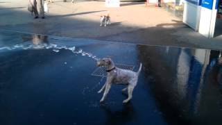 Hund spielt mit Wasser Dog eats water