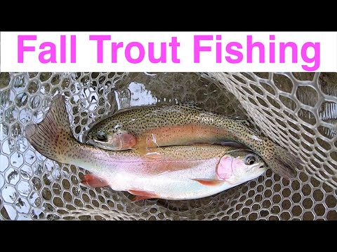 Fall Trout Fishing