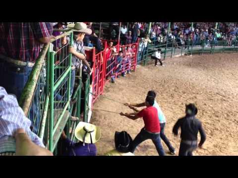 Accidente chistoso de jaripeo. (Bull ride accident)