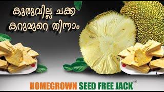 SEED FREE JACK - Homegrown Biotech