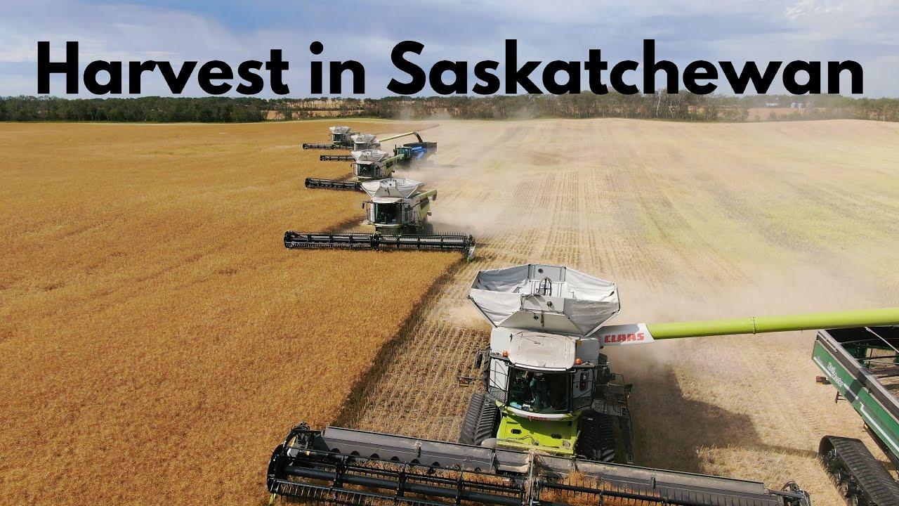 Harvest in Saskatchewan 2020