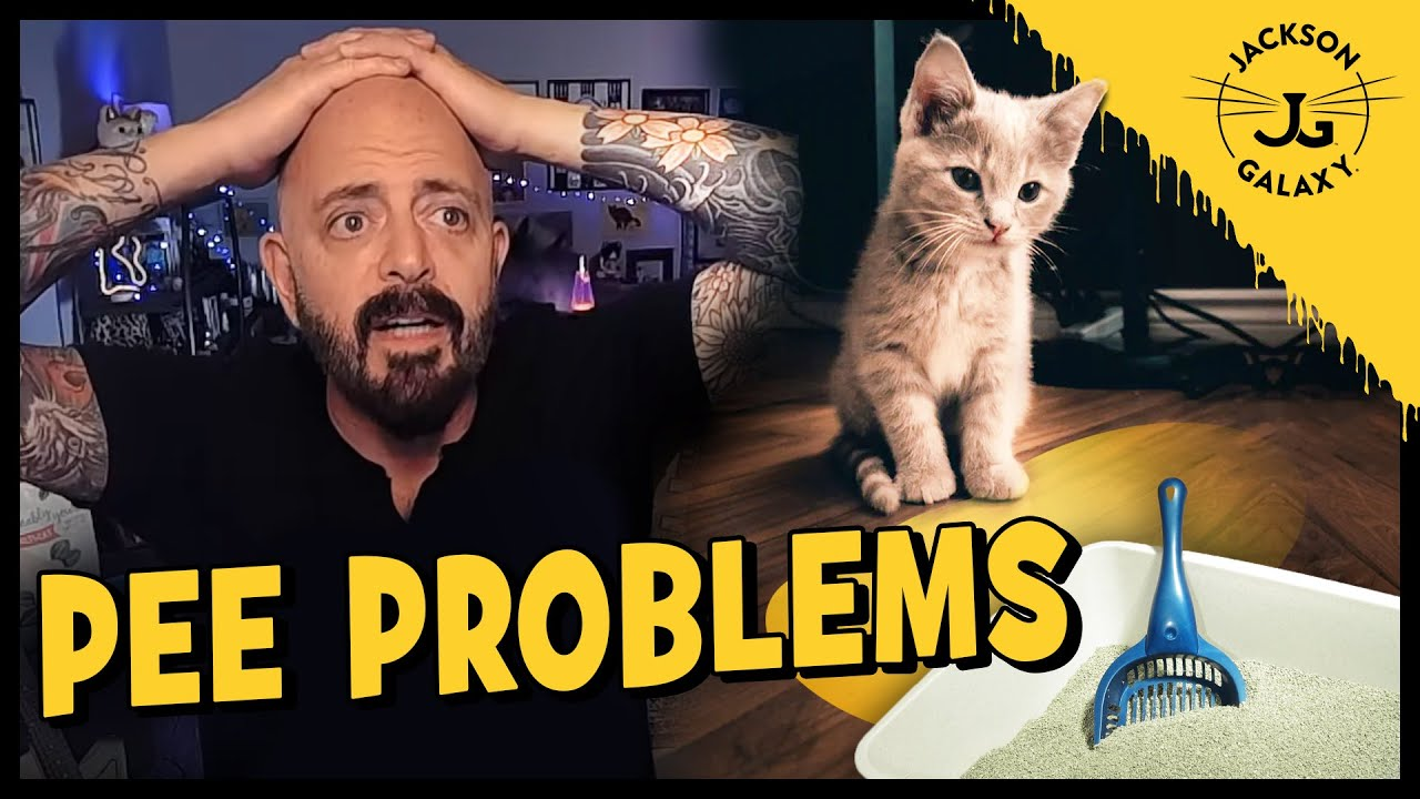 Tips To Help With Litter Box Problems With Jackson Galaxy Youtube