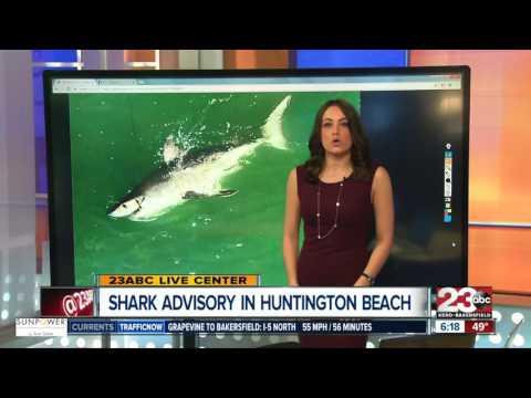 Shark Advisory For Huntington Beach