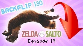 Cat does backflip 180  Zelda&Salto