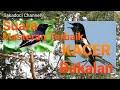 Master Kacer Suara Masteran Burung Paling Merdu Untuk Kacer Bakalan Gacor Burung Kicau  Mp3 - Mp4 Download