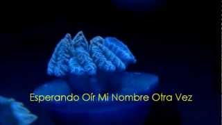 Swimming Home - Evanescence (español)