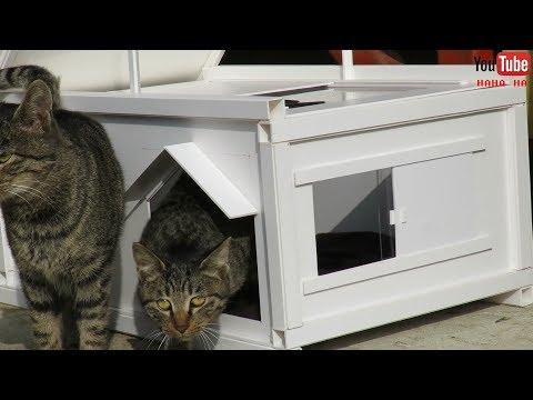고양이들에게 집한채 해줬습니다