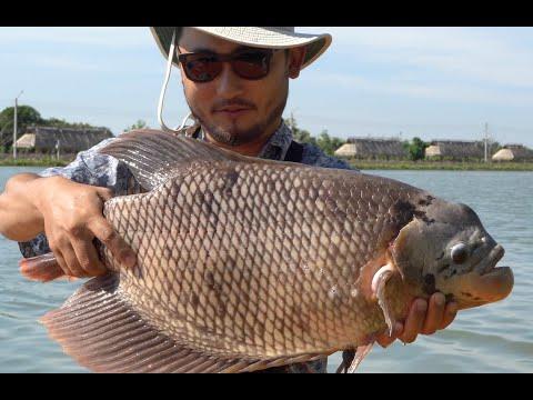 CATCHING UNIQUE THAI FISH | Catch And Cook Thai Style Tilapia