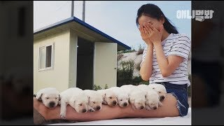 This Girl Had Enough Nuggets The Labrador Retriever Puppies