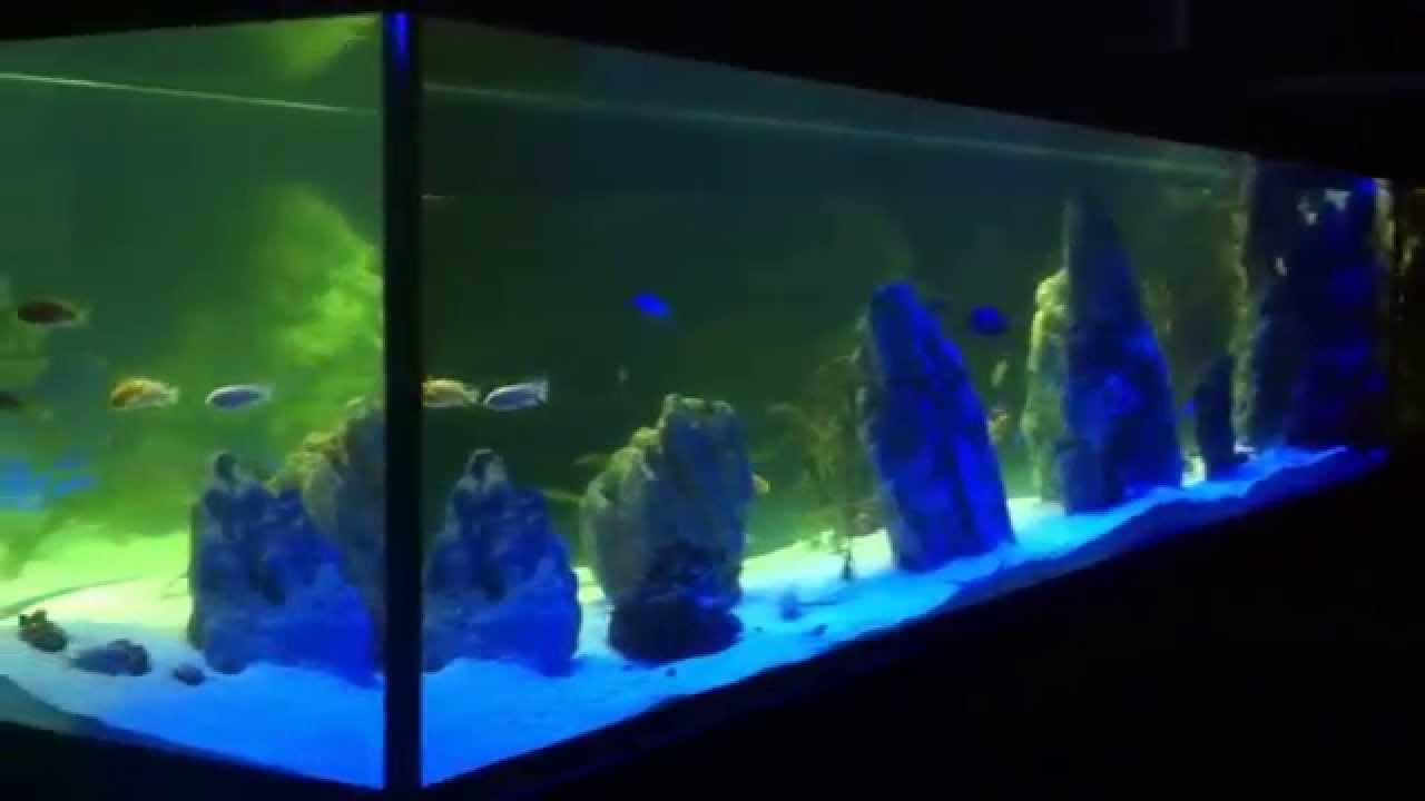 Mega Akwaria Argus Aqua Designgarden 695807066 Oświetlenie Led Nocne