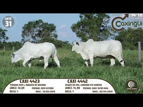 LOTE 31   CAXI 4423, CAXI 4442