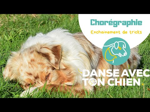 Enchainer 12 tricks en dog dancing - Comment faire?