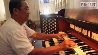 Clip khám phá cây đại phong cầm cổ nhất Việt Nam
